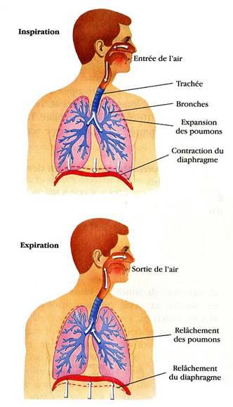 le_diaphragme3